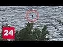 Школьный секретарь сфотографировала чудовище Несси - Россия 24