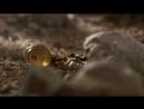 Муравьиная империя 2011 BBC HD