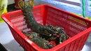 Корейская Уличная Еда - Огромный Омар Приготовление Морепродукты Рынок Джагальчи, Пусан Корея