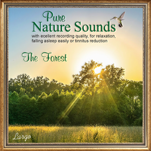 Largo альбом Pure Nature Sounds: The Forest
