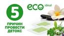 Eco Ideal 5 причин провести Детокс
