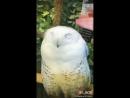 Весёлая сова