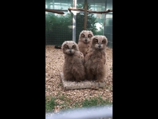 Fluffy Frens doin a head