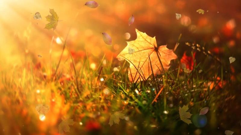 Листья желтые
