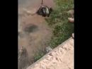 Отбили собаку у анаконды