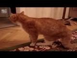 Очень обидчивый кот