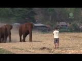 man_and_elephants