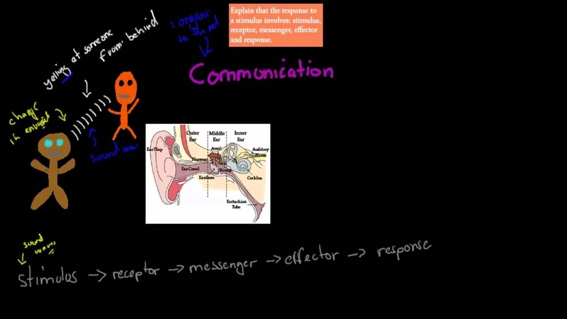 C 1 2 Stimulus to response HSC biology