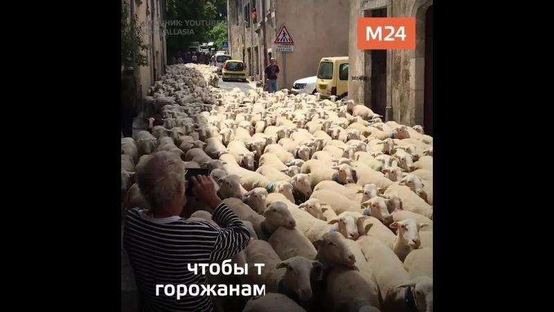 Овцы в Париже