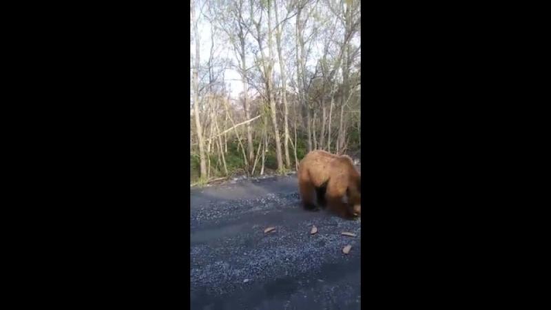 Кормят медведя