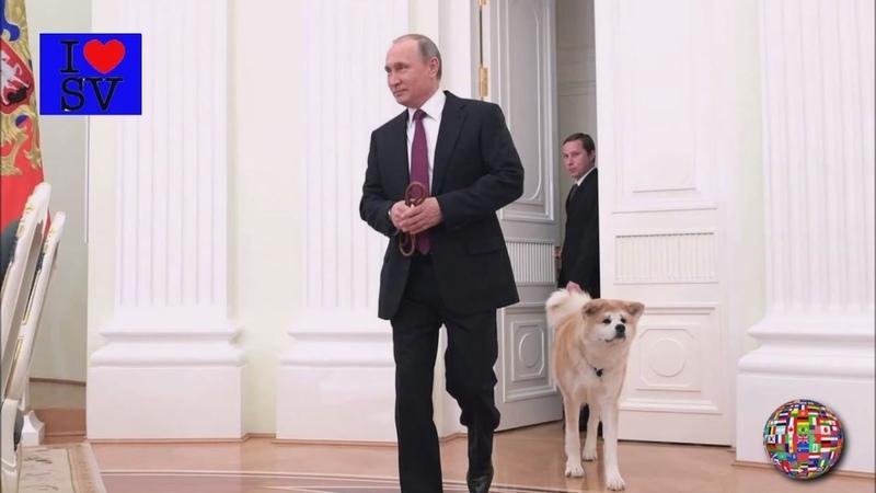 Dog Breed Akita Inu | Собаки породы акита-ину *SV HD*