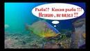 Тут рыбы нет, точно Думал я )) подводное видео про карасиков!