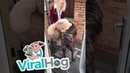 Dog Gets Giant Teddy Bear || ViralHog