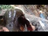 Сафари на слонах. Погонщики жгут!!! 😂😂👍 Тайланд. Коа-Лак.