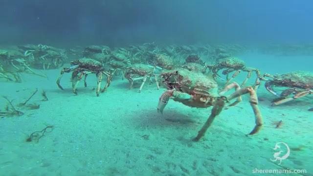 Роман Федорцов on Instagram Думаешь у тебя плохой день Подумайте об этом гигантском крабе пауке который должен иметь 8 ног плюс две клешни