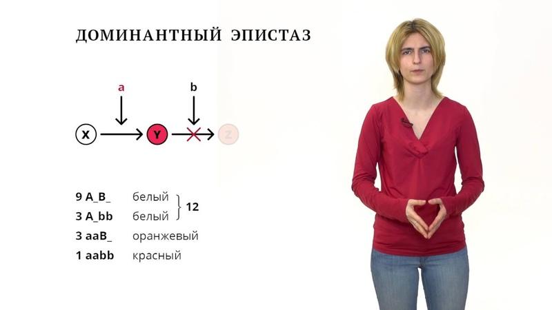 Взаимодействие генов. Решение генетических задач - 7