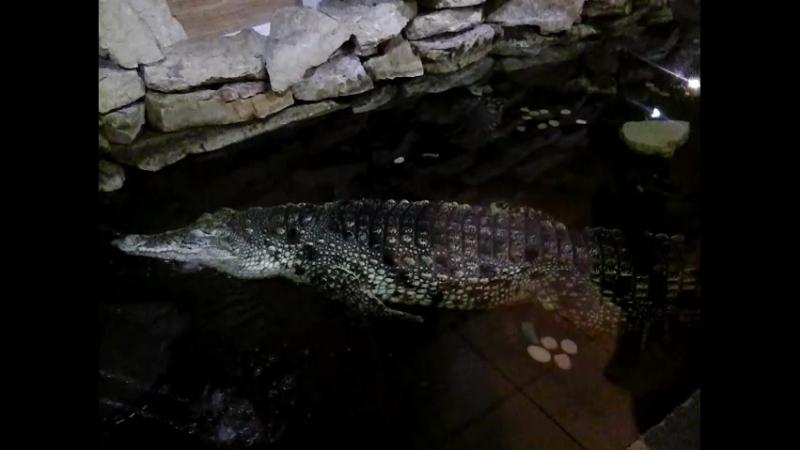 Черепаха и огромный крокодил в Ленинградском зоопарке