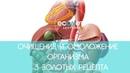 ОМОЛОЖЕНИЕ организма 3 ЗОЛОТЫХ рецепта