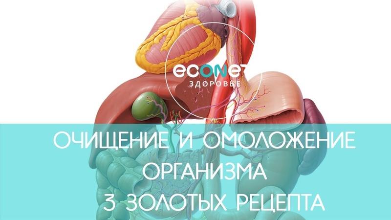 ОМОЛОЖЕНИЕ организма: 3 ЗОЛОТЫХ рецепта