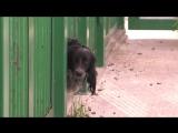 Александр Кузьмин передал питомник по содержанию собак в муниципальную собственность