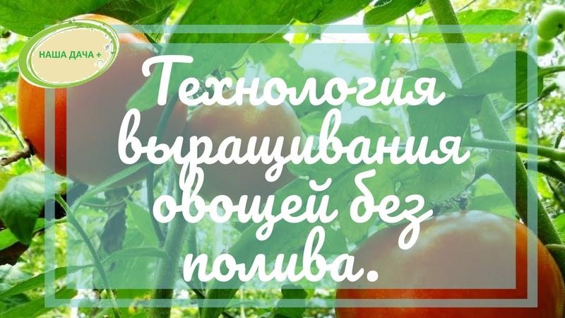Технология выращивания овощей без полива. Часть 1. Кольцова Ирина