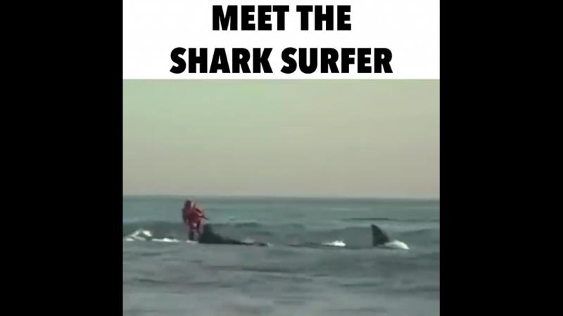 Акулий серфинг11