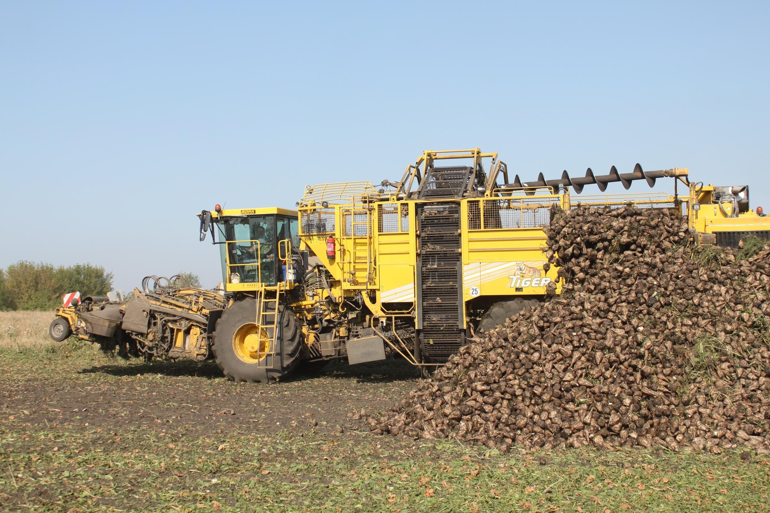 Аграрии собрали 3 миллиона тонн сахарной свёклы