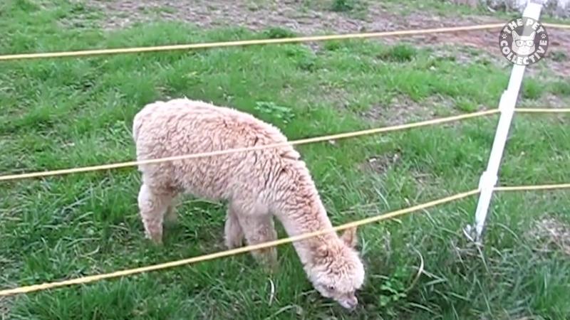 Pet Escape Artists Funny Pet Video Compilation