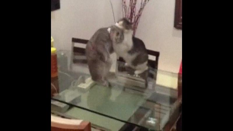 Кот борцух
