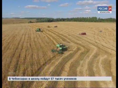 В Чувашии скошено 83 процента зерновых и зернобобовых культур