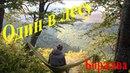 Соло-матрасная Боржава - 2. Один в лесу. Осенний бушкрафт (bushcraft)