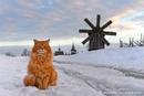 Pыжий кот Кеша - смотритель острова Кижи.