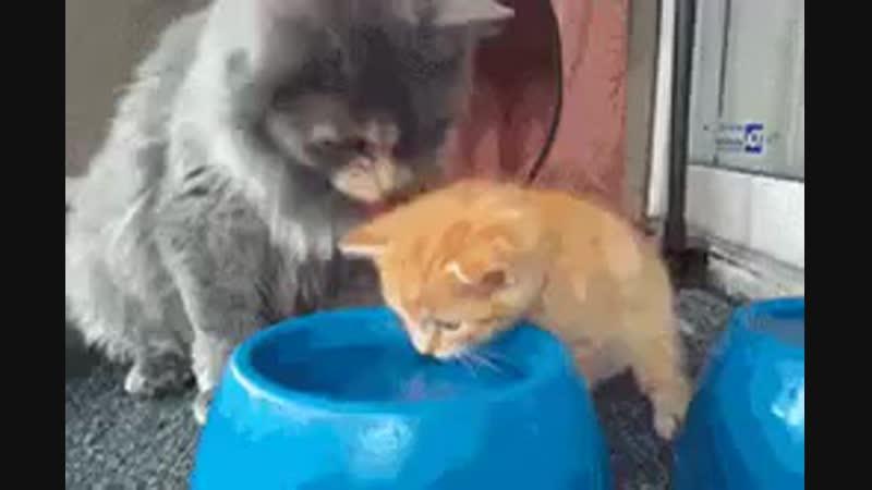кошка,кошка где твоя плошка?