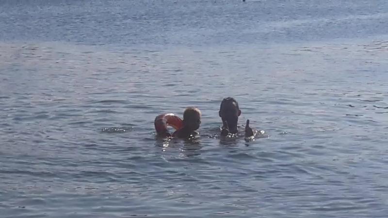Мишель очень ловко плавает в надувном круге😄🐳🐬 Успевает при этом обрызгать нас водой и напугать окружающих криком Акула 😄
