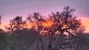 Djuma: Sunrise - 05:12 - 11/10/18