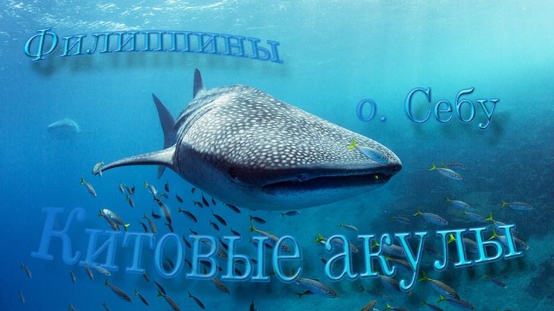 Мы и китовые акулы в Ослобе