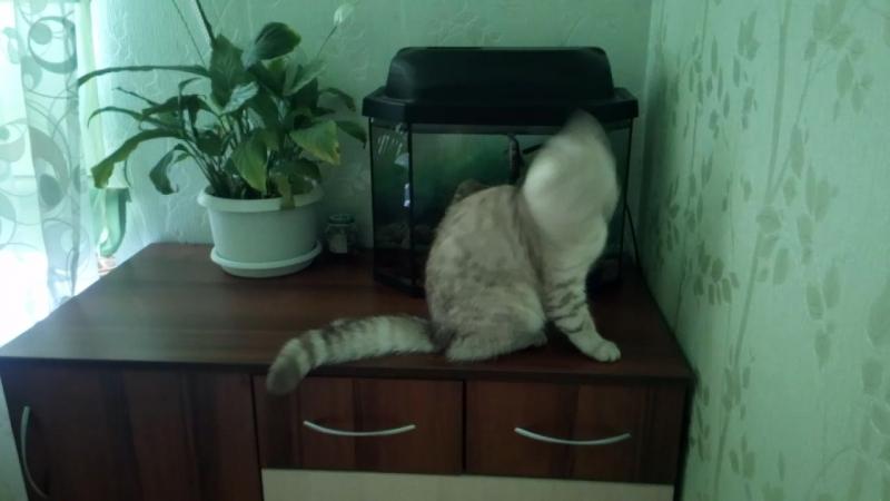 Кот и рыбы