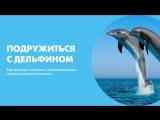 Подружиться с дельфином. Как проходит плавание с очаровательными морскими млекопитающими