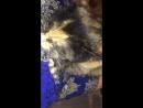 Кошка выросла а привычка осталась