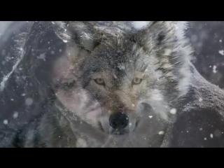 Волчицы вой! Классная песня и музыка.mp4
