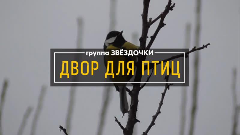 акция - ДВОР ДЛЯ ПТИЦ д/сад УЛЫБКА - группа Звёздочки