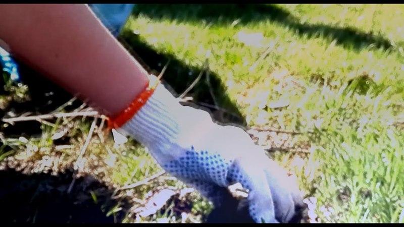Plogging is a medicine for humanity and Earth (Ukraine, Dnipro, Taromske)