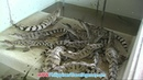 Crocodile Farm - Palawan Tours - WOW Philippines Travel Agency
