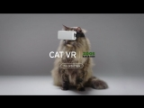 Introducing CatVR - A Partnership of Zoos Victoria, RSPCA and Isobar