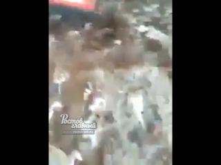 Трактор давит индюшек 11.9.2018 Ростов-на-Дону Главный