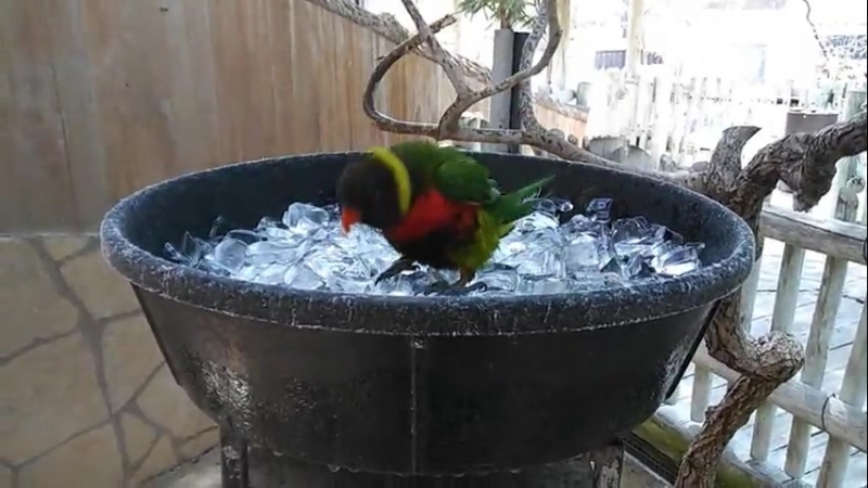 That feel when it's 40°C (104°F) outside and you're a bird who can't sweat