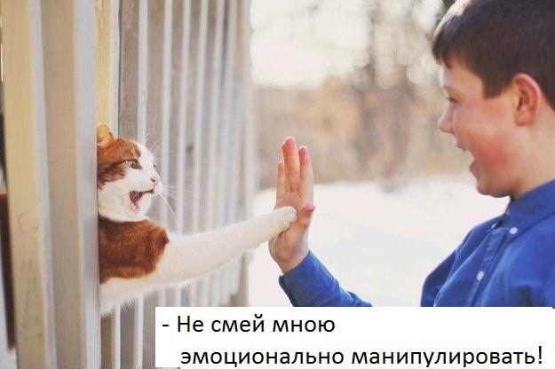 https://pp.userapi.com/c846320/v846320097/d0ec8/7Iiz2H7qPt8.jpg