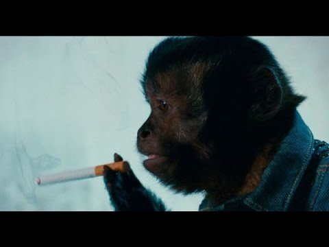 Funny Hangover Part II This monkey isnt just a normal monkey scene