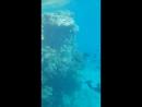 Египет Красное Море 👙💕