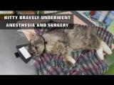Человек спасает котика